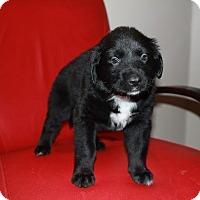 Adopt A Pet :: Aloe - Saskatoon, SK