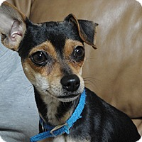 Adopt A Pet :: Roxy - Meridian, ID