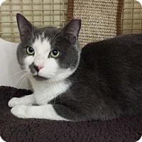 Adopt A Pet :: Albert - Merrifield, VA