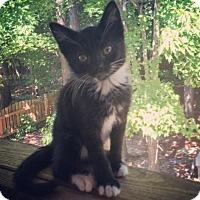 Adopt A Pet :: Jewel - Raleigh, NC