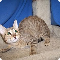 Adopt A Pet :: K-Ls3-Lilly - Colorado Springs, CO