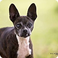 Adopt A Pet :: Mossy - Weatherford, TX