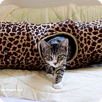 Adopt A Pet :: Rita - Island Park, NY
