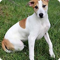 Adopt A Pet :: Shine - Waldorf, MD