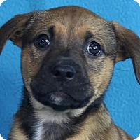 Adopt A Pet :: Huck - Minneapolis, MN