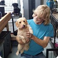 Adopt A Pet :: ALTON - Lubbock, TX