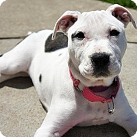 Adopt A Pet :: Avery - Framingham, MA
