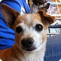 Adopt A Pet :: Marty - Las Vegas, NV