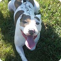 Terrier (Unknown Type, Medium) Mix Dog for adoption in Fairfax, Virginia - Tater