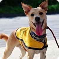 Adopt A Pet :: Kai - Waterbury, CT