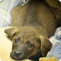 Adopt A Pet :: Basil - Boca Raton, FL