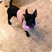 Adopt A Pet :: Layla - North Brunswick, NJ