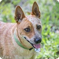 Adopt A Pet :: Ruby - Bradenton, FL