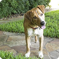 Adopt A Pet :: Charlton - Vancouver, BC