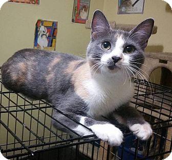 Calico Cat for adoption in Atlanta, Georgia - Minerva