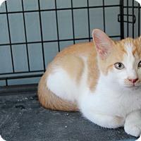 Adopt A Pet :: Truffles - Avon, NY