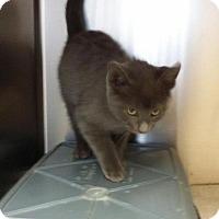 Adopt A Pet :: Rickell - Maquoketa, IA