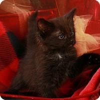Adopt A Pet :: Emmanuel - Pegram, TN