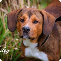 Adopt A Pet :: Riley - Middleburg, FL