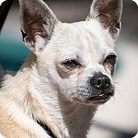 Adopt A Pet :: Stanley - Houston, TX
