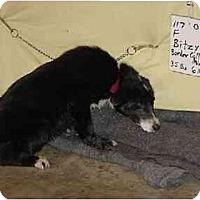 Adopt A Pet :: Bitzy/Pending - Zanesville, OH