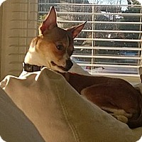 Adopt A Pet :: Nate - San Francisco, CA