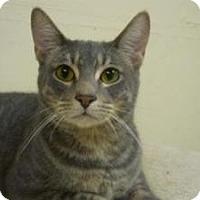 Adopt A Pet :: Hobbes - Milwaukee, WI