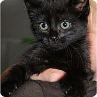 Adopt A Pet :: Cokie - Monroe, GA