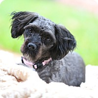 Adopt A Pet :: Jessie - Kingwood, TX