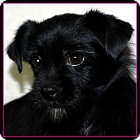 Adopt A Pet :: PENELOPE - ADOPTION PENDING - Little Rock, AR