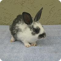 Adopt A Pet :: Kasey - Bonita, CA