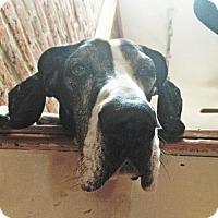 Adopt A Pet :: Aquinas - Baltimore, MD