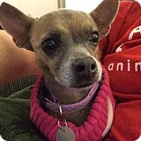 Adopt A Pet :: Tia - Las Vegas, NV