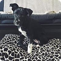 Adopt A Pet :: April - Gainesville, FL