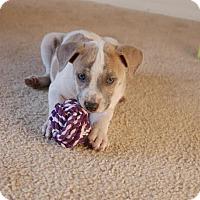 Adopt A Pet :: Rose - Windermere, FL