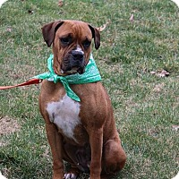 Adopt A Pet :: Kita - New Oxford, PA