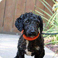 Adopt A Pet :: Panini - 9 pounds - Los Angeles, CA