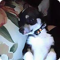 Adopt A Pet :: Thor - Ogden, UT