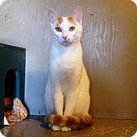 Adopt A Pet :: Milo - Lathrop, CA