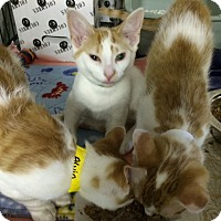 Adopt A Pet :: Absolut - Byron Center, MI