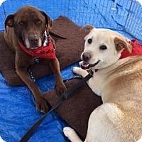 Adopt A Pet :: Raider - San Francisco, CA