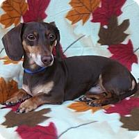 Adopt A Pet :: Dandy - Charlotte, NC