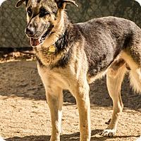 Adopt A Pet :: Jinxie - Phoenix, AZ