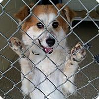 Adopt A Pet :: Falkor - Encinitas, CA