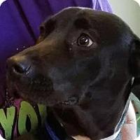 Adopt A Pet :: Cleo - Billerica, MA