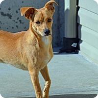 Adopt A Pet :: John - Kansas City, MO