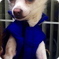 Adopt A Pet :: Jack Frost - Costa Mesa, CA
