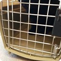 Adopt A Pet :: Diamond 111106 - Joplin, MO