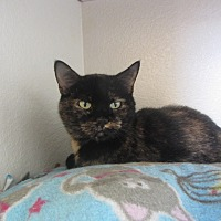 Adopt A Pet :: Caprice - Ridgway, CO