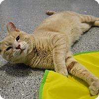 Adopt A Pet :: Bing - Michigan City, IN